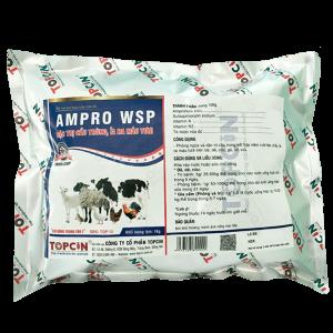 AMPRO WSP